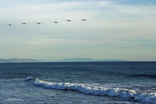 A Bird Formation Over the Ocean
