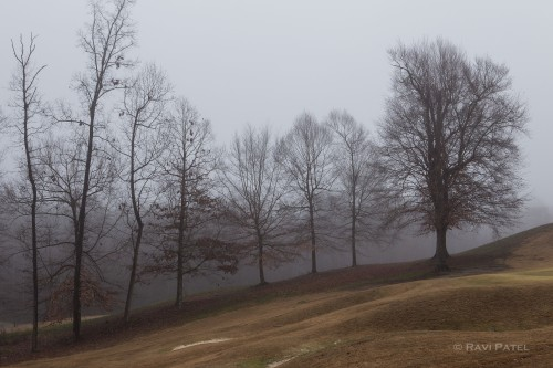 Naked Trees in the Fog