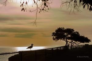 Striking Sunset Silhouette