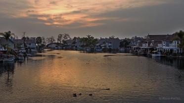 Waddling on Golden Pond