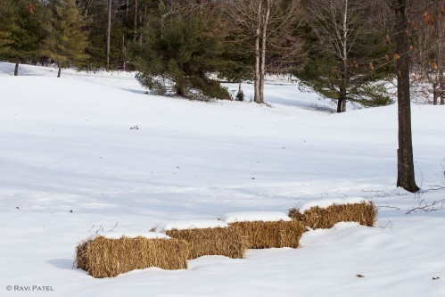 Snow Icing on Bales