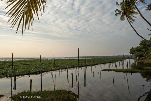 Postcard from Coconut Lagoon