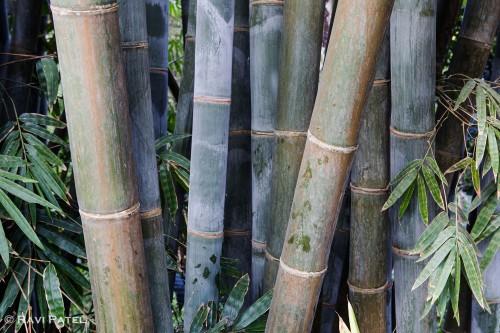 Shades of Bamboo