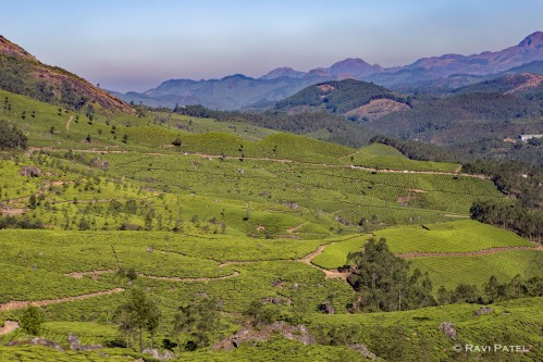 A Valley in Munnar
