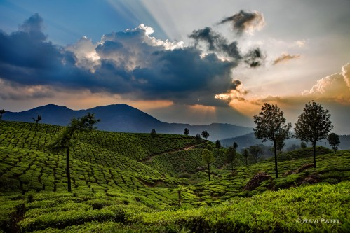Dramatic Sky over Munnar Tea Plantation