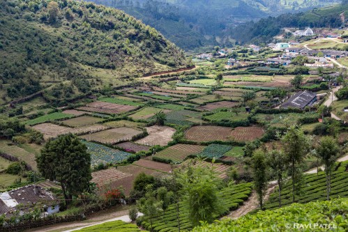 Farming in Munnar Valley