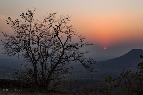 A Tree Silhoutted at Sunset