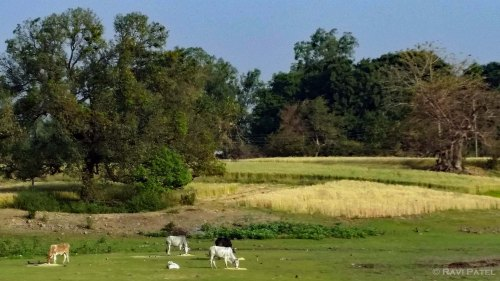 Rural Mandu