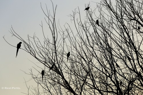 Birds in Silhouette
