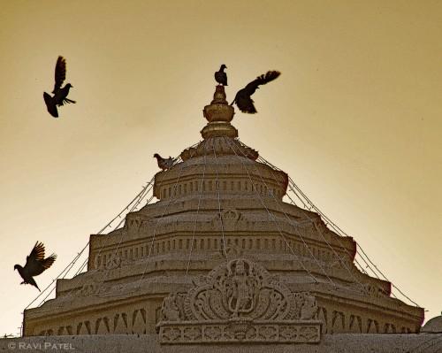 Flight of Birds at a Temple