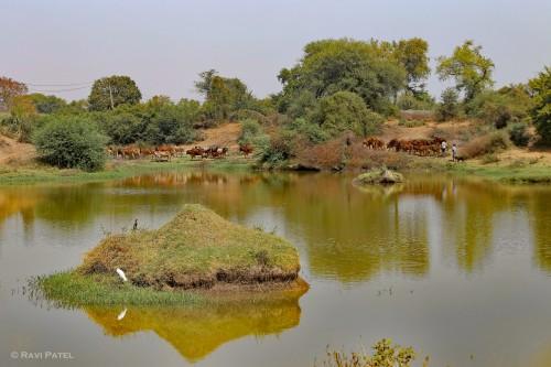 Rural India Landscape