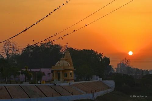 Temple Birds at Sunrise