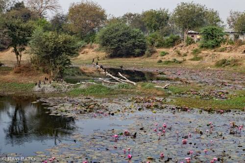 A Rural Village Pond