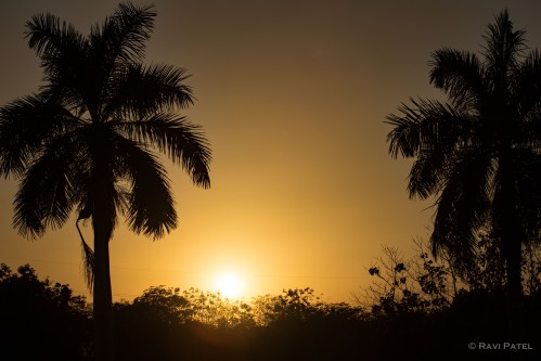 Sunset Between Palms