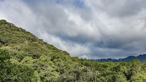 Rainforest Against the Clouds