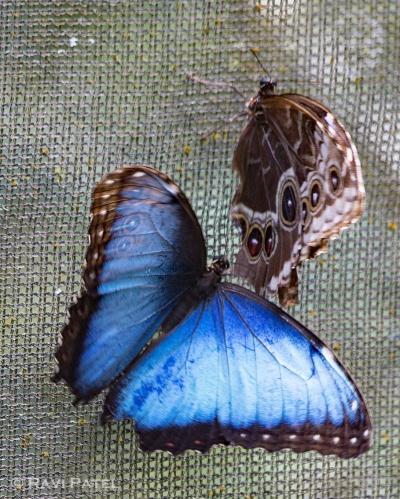 Butterflies Getting Closer