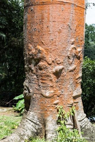 Quira Tree Trunk