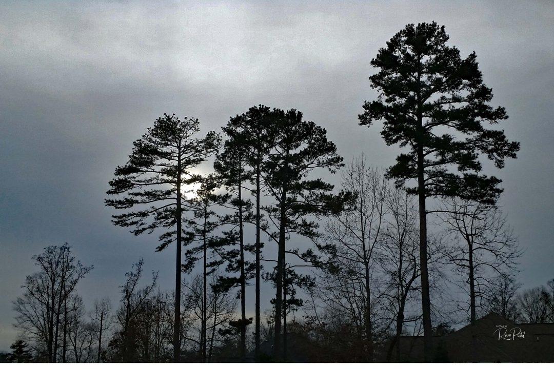 Trees Photos By Ravi